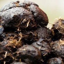 Hästgödsel och matavfall skall bli biogas i Göteborgsregionen
