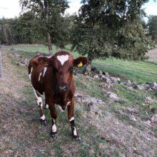 Blockkedjor inspirerar diskussion om digital köttkedja